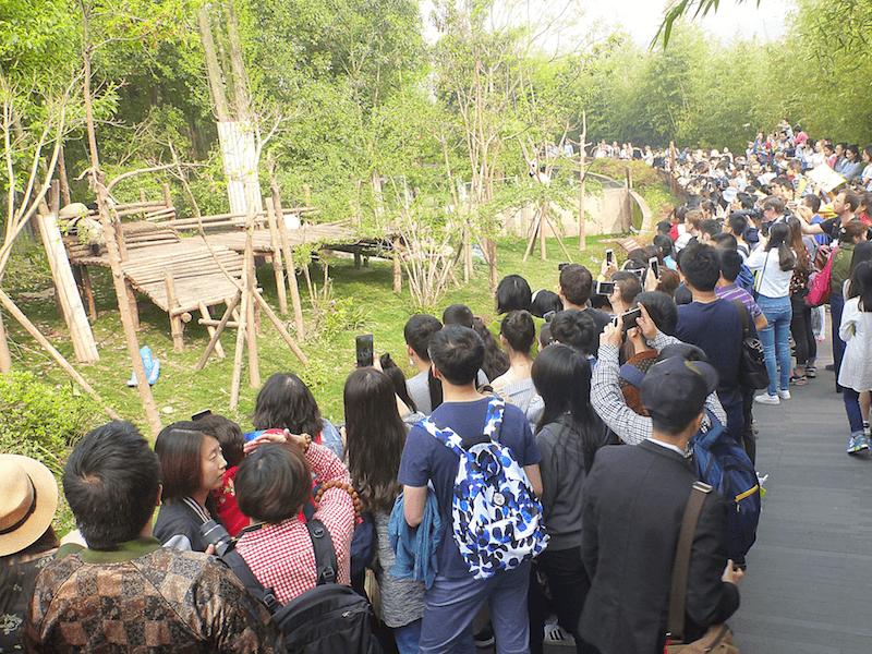 China crowd pandas