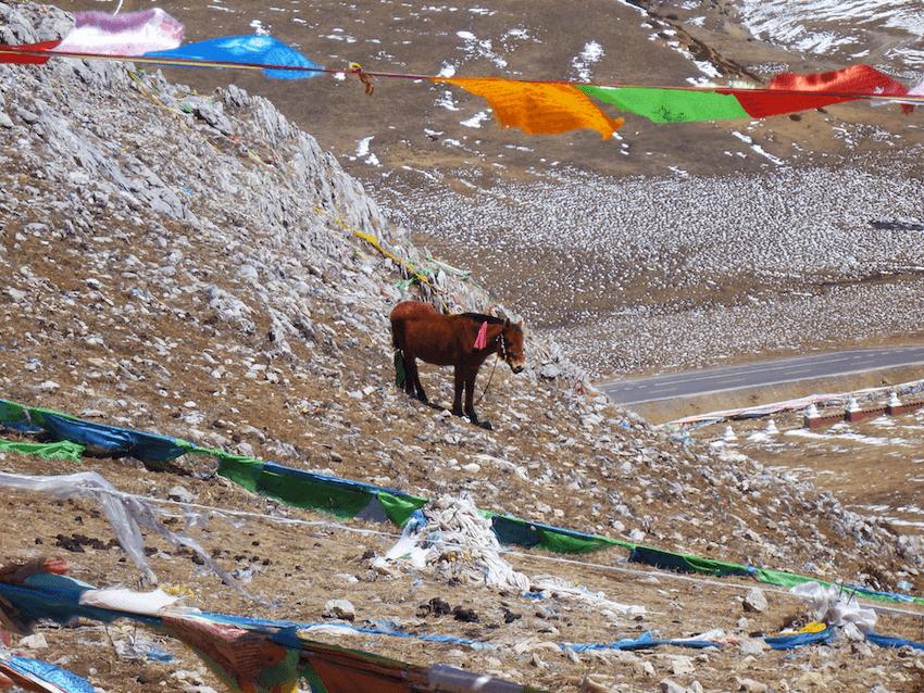 Prayer Flags Holy Mountain Litang Tibet China with horse