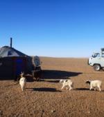 Mongolia ger Gobi Desert animals
