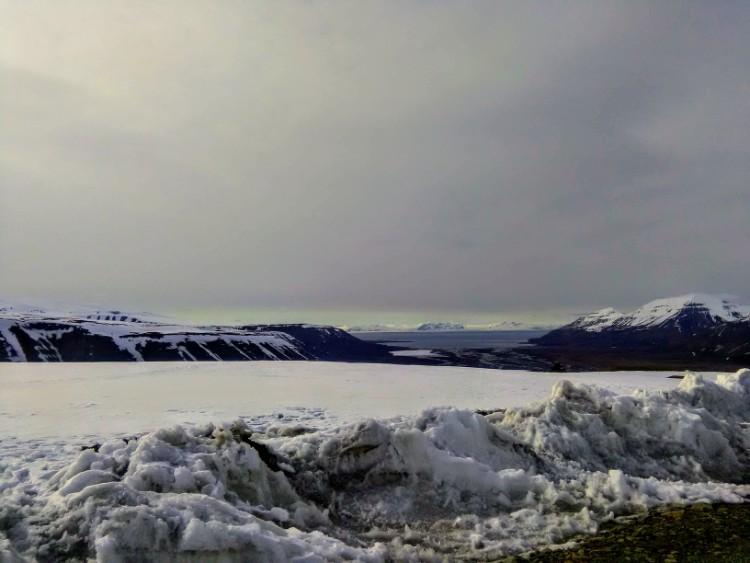 Svalbard Norway Longyearbyen polar dog husky