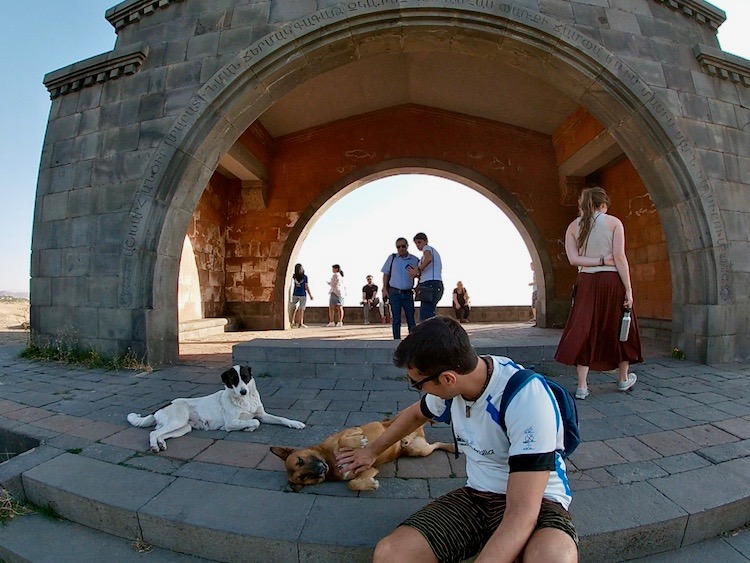 Playing with dogs in Armenia