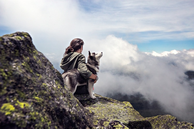 6 Tips for Stress-Free Traveling with Your Dog